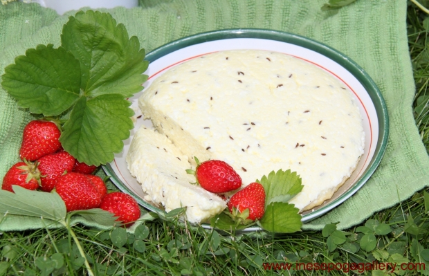 Midsummer treats: caraway seed cheese