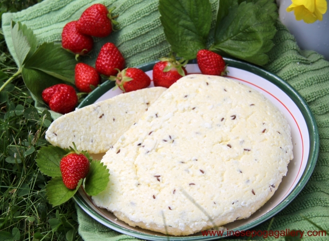 Latvian Midsummer caraway seed cheese