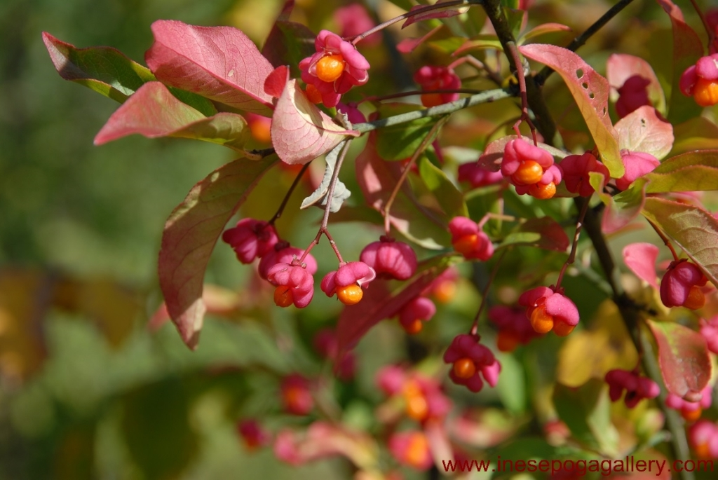 Autumn colors of garden