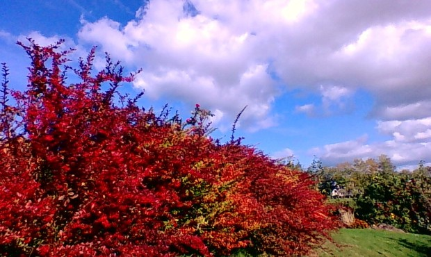 Autumn energy 2
