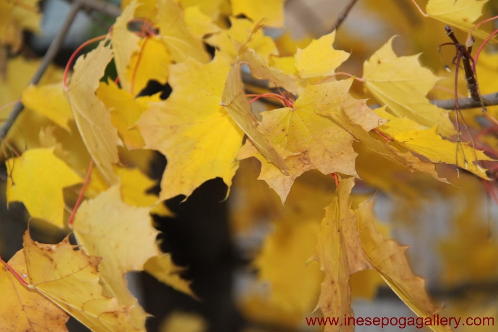 Autumn is here nature photography