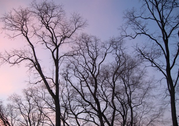 Winter sky and tree