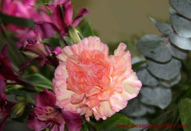 International Women's Day carnation flowers