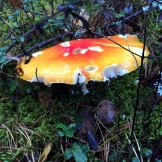 Latvian forest: mushrooms we do not eat, but enjoy their look