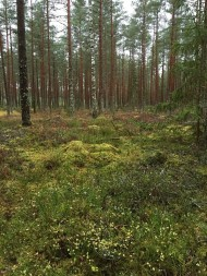 latvian-forest-56