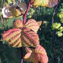 leaves-and-mushrooms-91