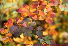 autumn-leaves-1