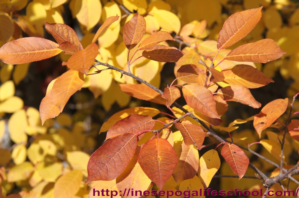 autumn-leaves-2