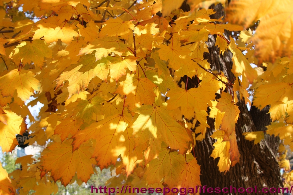 autumn-leaves-4