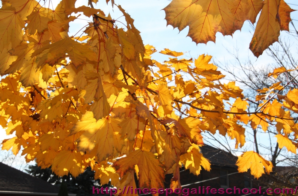 Photos of fall trees