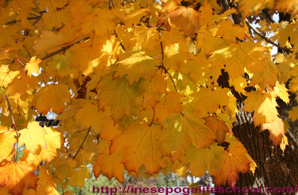 golden fall photos