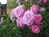 My mom loved flowers