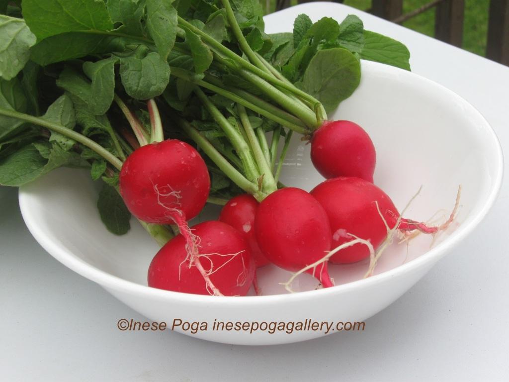 Love, grow and eat red radish