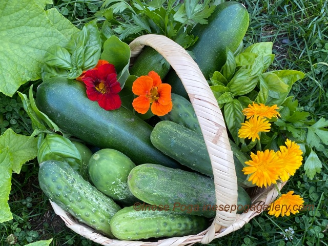 Lovely veggie basket