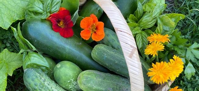 Lovely veggie basket