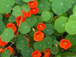 Beauty of backyard flowers in late fall