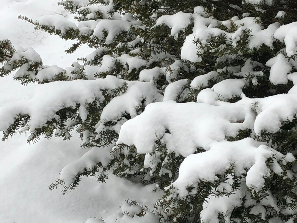 December: snow and more snow